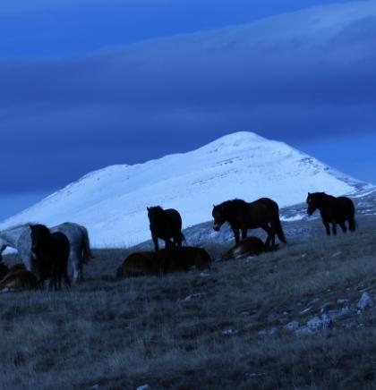 Foto safari na bosanski način