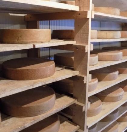 Dvije stotine litara mlijeka za kolut odličnog sira