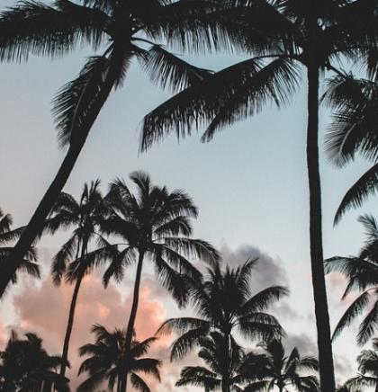 Sadnjom milion palmi do manje smrtnosti