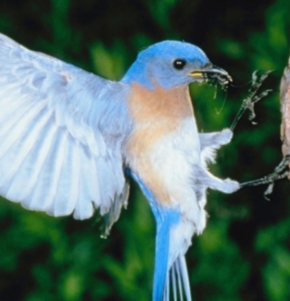 Ruski zoovrt uništio sve ptice zbog ptičijeg gripa