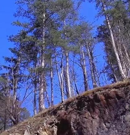 Projekti očuvanja i zaštite vode i šuma prioritet Vlade TK