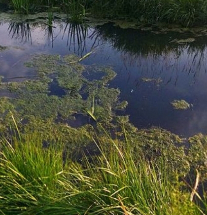 Uz svjetski dan biodiverziteta: Alarm za spasavanje močvare Ždralovac