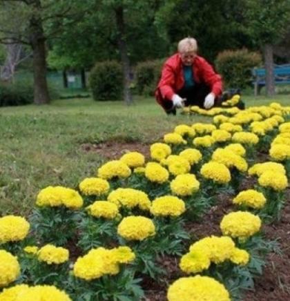 """Radnici """"Parka"""" zasadima cvijeća ukrasili Pionirsku dolinu"""