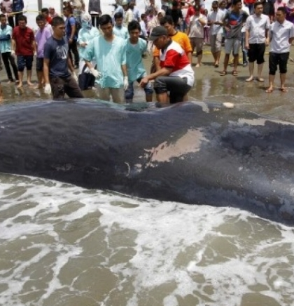 Kitovi u Sredozemnom moru otrovani plastičnim otpadom