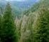 Doktor za drveće: Najbolja zaštita od požara su prevencija i planiranje