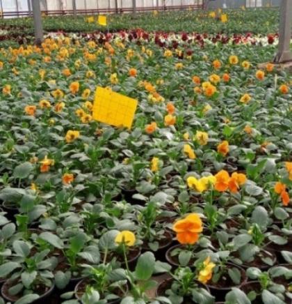 'Park' započinje sadnju novih 100.000 sezonskih cvjetova