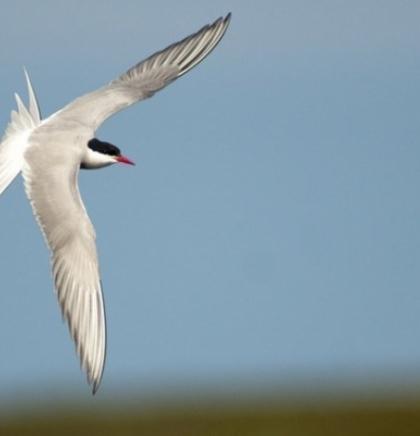 Ptice promijenile rasporede selidbe zbog klimatskih promjena?