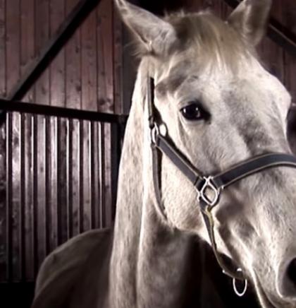 Prekograničnim projektom 'Konji bijeli' zaštiti lipicanere