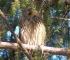 Počelo zimsko prebrojavanje ptica u Bosanskoj Posavini