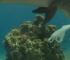 Trećina koraljnih grebena preplavljena plastikom