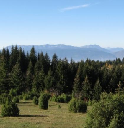 Kazne do 1.500 KM zbog loženja vatre u šumama i njihovoj blizini