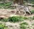 Vučica novi stanovnik 'Pionirske doline' nakon 26 godina