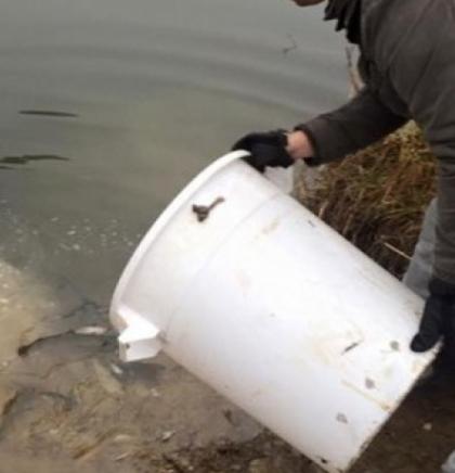 Sportski ribolovci iz Bugojna poribili pritoke Vrbasa