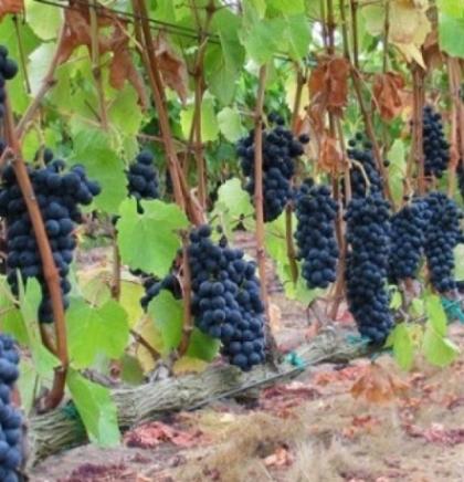 Znanstveno-stručni skup o vinogradarstvu i vinarstvu u BiH