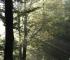 Prašuma Perućica, jedinstveni biser biodiverziteta na tlu Evrope