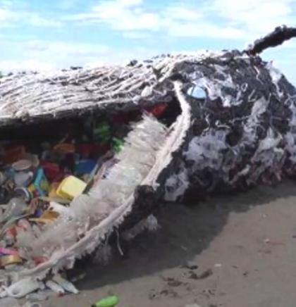 U uginulom kitu šest kilograma plastičnog otpada