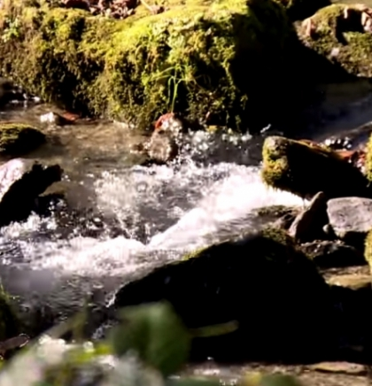Ekolozi: Zbog malih hidroelektrana BiH godišnje gubi više od četiri miliona KM