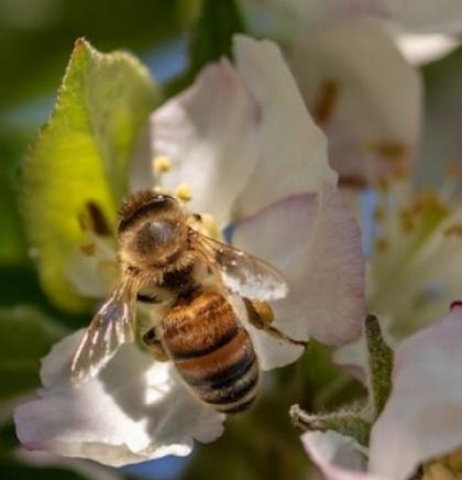 """U Sloveniji je """"pčela"""" izabrana za riječ godine"""