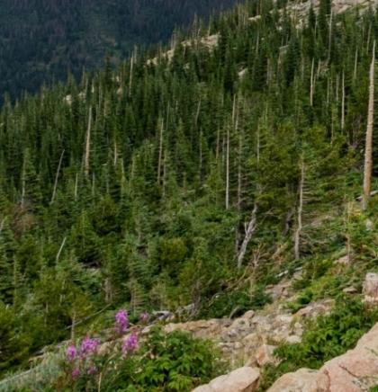 Na području Glamoča posađeno 160.000 sadnica smreke i bijelog bora