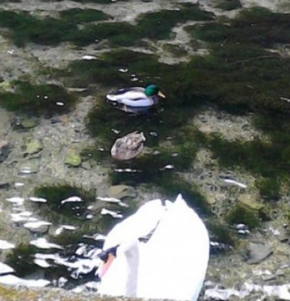Akcija čišćenja korita i priobalja rijeke Bune ponovo okuplja brojne ronioce