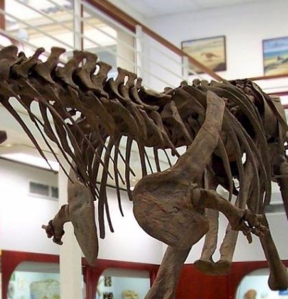 Divovska bedrena kost dinosaura pronađena u jugozapadnoj Francuskoj