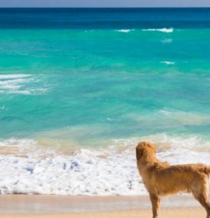 Pogledajte popis plaža za pse u Hrvatskoj