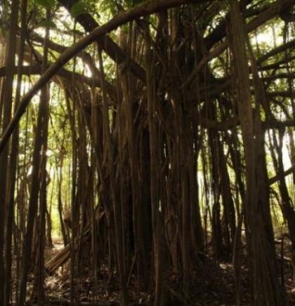U Sarajevu organizovan mirni protest zbog deforestacije Amazona
