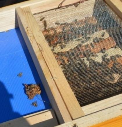 Čuljak: Pčelari moraju spremno odgovoriti klimatskim promjenama