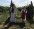 (VIDEO) Međunarodna novinarska berba grožđa ove godine na Bisernom ostrvu