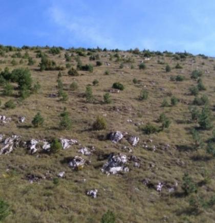Na Bjelašnici pošumljeno 165 hektara površine