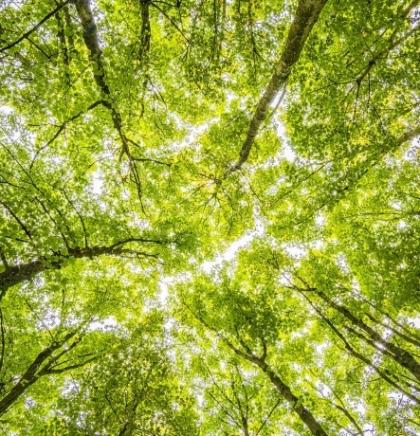 Irska će do 2040. zasaditi  440 miliona stabala