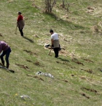 Članovi KUD 'Igman' zasadili 150 sadnica na Igmanu