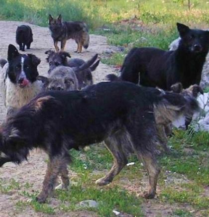 Zaustaviti novo eskaliranje problema napuštenih pasa, riješiti problem humano
