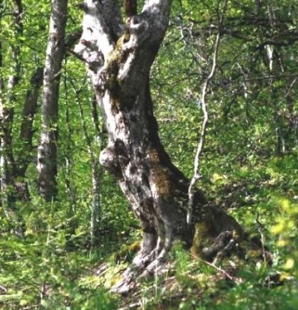 Predstavljen projekt o stanju prirode i upravljanju prirodnim resursima u BiH