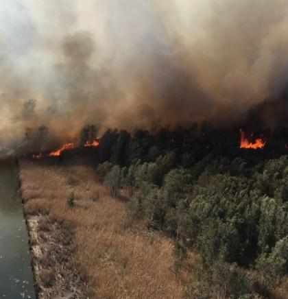 Žena spasila koalu iz požara