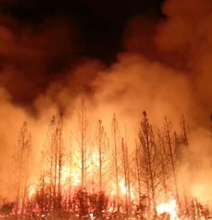 Nestle i Unilever povezani sa indonezijskim šumskim požarima koji su zahvatili jugoistočnu Aziju