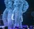 Njemački cirkus koristi 3D holograme umjesto pravih životinja