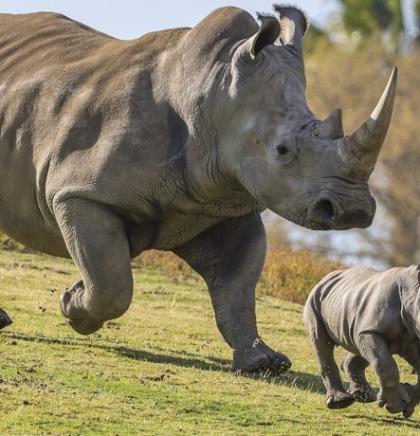 Zoološki vrt u Detroitu pretvara životinjski otpad u električnu energiju
