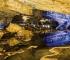 Špilju Vjetrenicu prošle godine posjetilo 15 tisuća turista