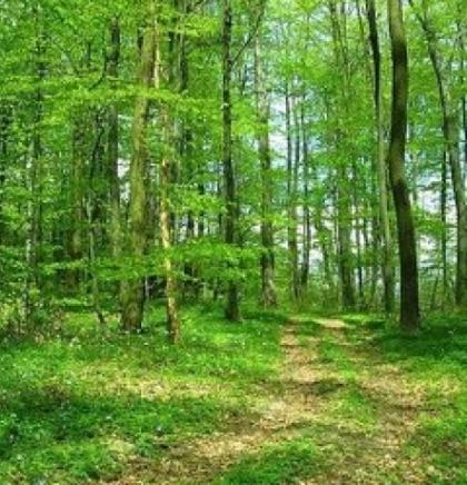 U zdravom okolišu zdrav život: Sječemo granu na kojoj sjedimo
