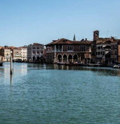 Kanali Venecije su se toliko očistili da su vidljive ribe, a labudovi su se vratili