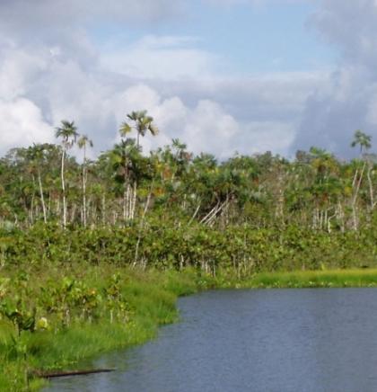 Iskrčeni dijelovi Amazonije emitiraju više CO2 nego što ga apsorbiraju