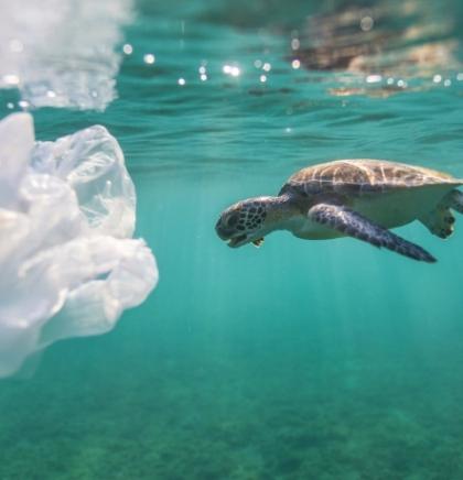 Plastika u oceanu morskim kornjačama miriše kao hrana