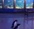 Pingvini istražuju svoj akvarijum dok je zatvoren za posjetitelje (VIDEO)