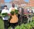 Bolnica na krovu osigurava 3000 kilograma organskog povrća godišnje za pacijente