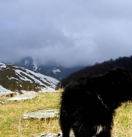 Zapisi jednog planinara: Priča o psu Cigi sa Zelengore