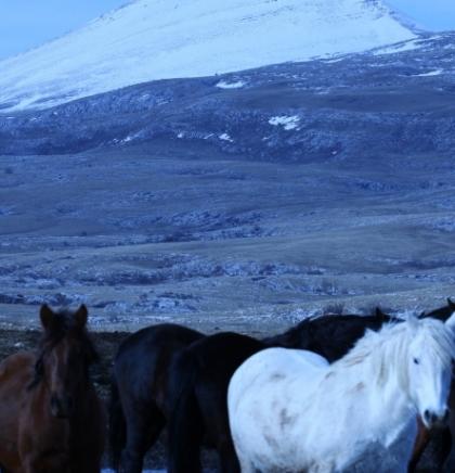 Krdo konja krstari prostranstiva visoravni Krug