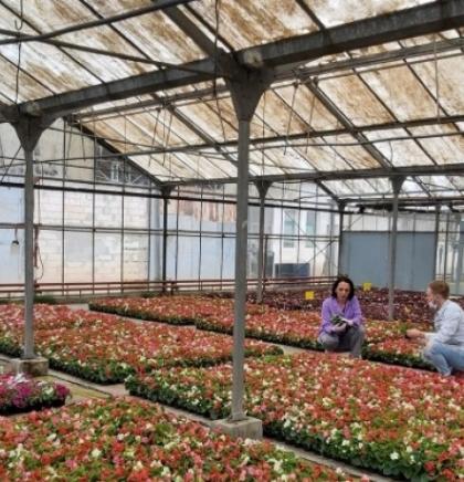 Akcija ukrašavanja Sarajeva sezonskim cvijećem