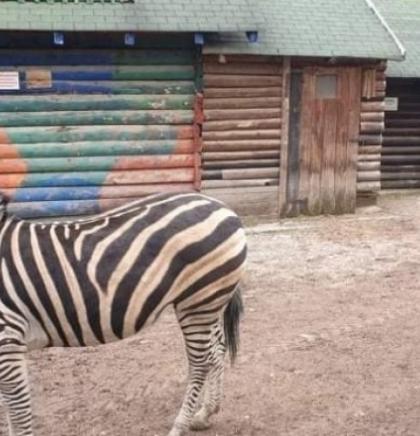 Pionirska dolina i zoo vrt od sutra počinje s radom