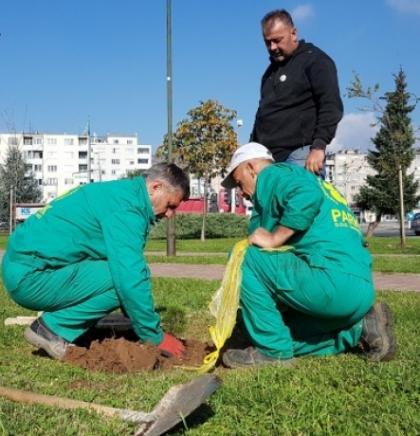 Regionalna akcija sađenja drveća 'Drvo prijateljstva' i u Sarajevu